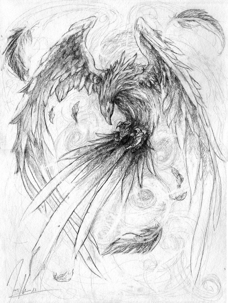 775x1031 Phoenix By ~herrmagermilch On Sketches