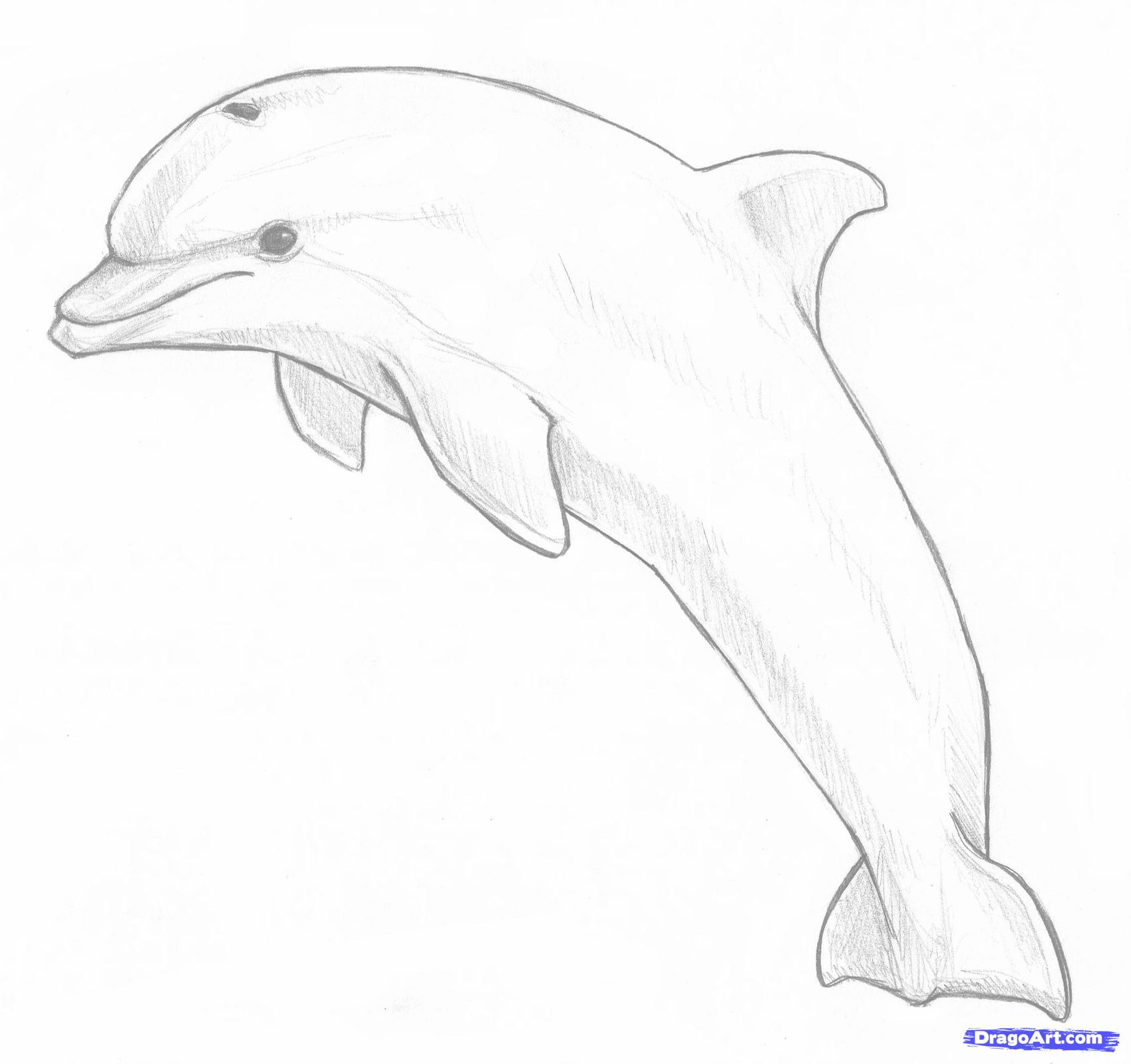 1700x1599 How To Draw A Jumping Dolphin Step 8 Projects To Try