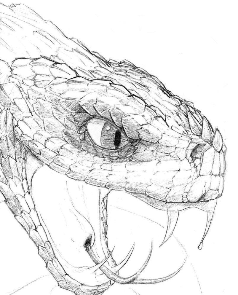 803x995 Snake Head Drawing