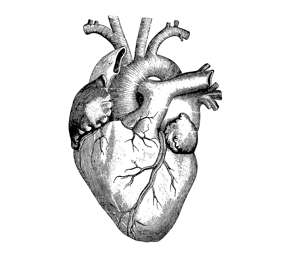 999x900 Cardiac Development Needs More Than Protein Coding Genes Mit News