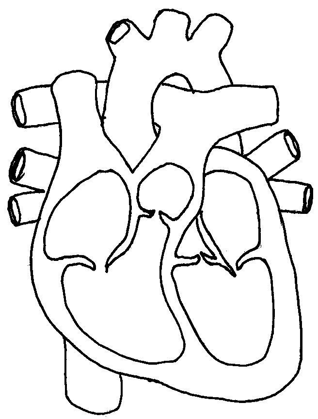 656x864 Human Heart Sketch Diagram Free Download Clip Art
