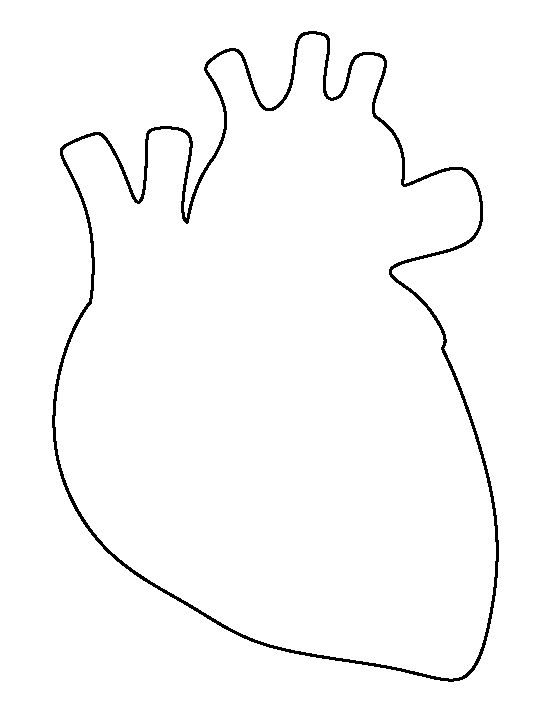 550x712 Real Heart Human Heart Pattern Use The Printable Outline