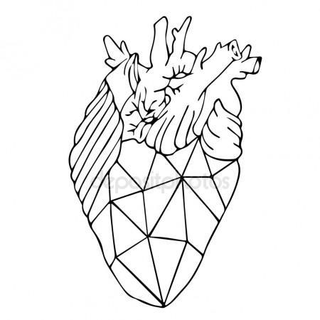 450x450 The Best Anatomical Heart Drawing Ideas