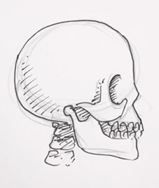 227x268 How To Draw A Skull From The Side Real Easy Shoo Rayner Author