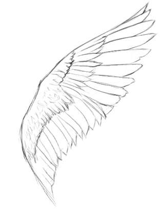 318x412 Realistic Angel Wings Drawingdenenasvalencia
