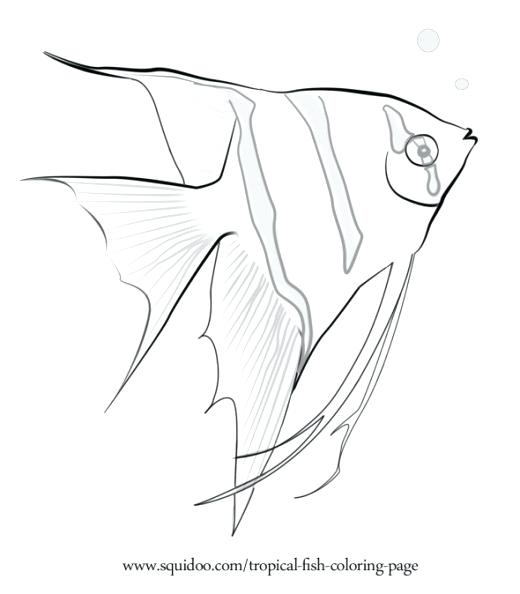 520x594 Realistic Fish Coloring Pages Angel Fish Coloring Page Rainbow