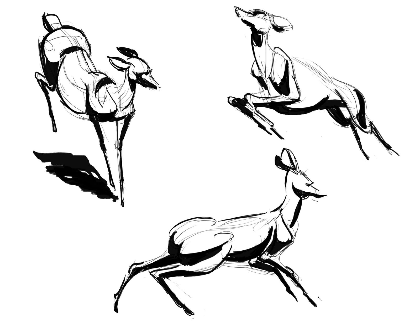 1600x1236 deer running drawing realistic