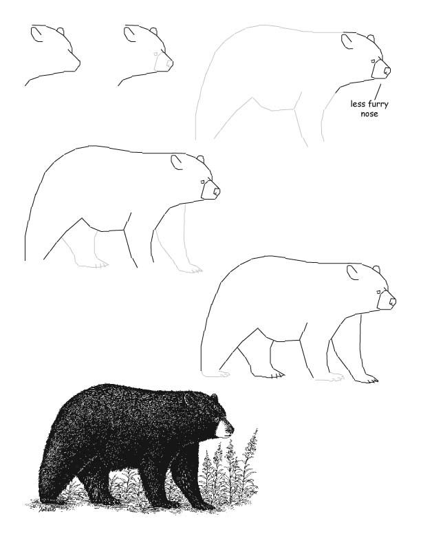 612x792 how to draw a realistic black bear Crafty Pinterest Bears