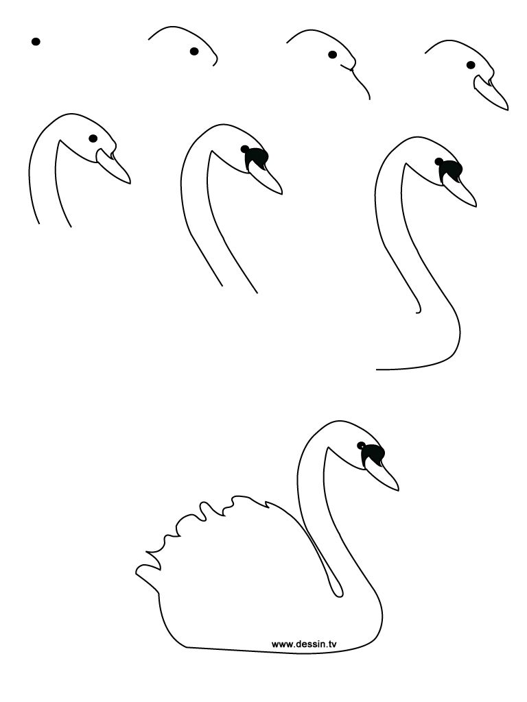 768x1024 Drawing realistic Birds Step by Step learn how to draw a swan