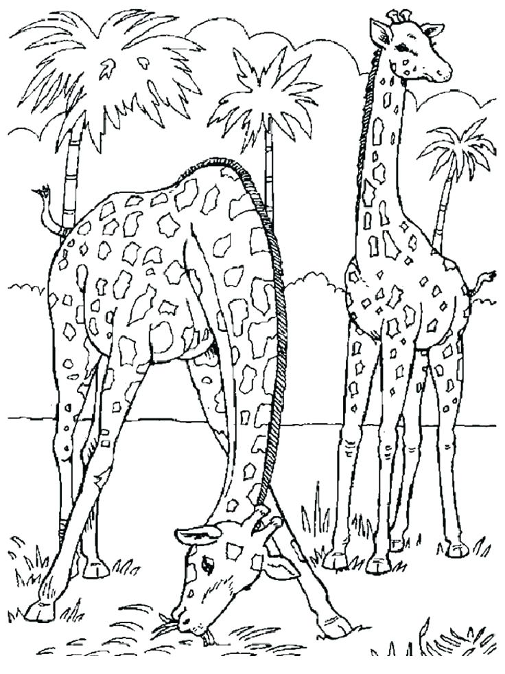 736x981 Cool Realistic Animal Coloring Pages Fee