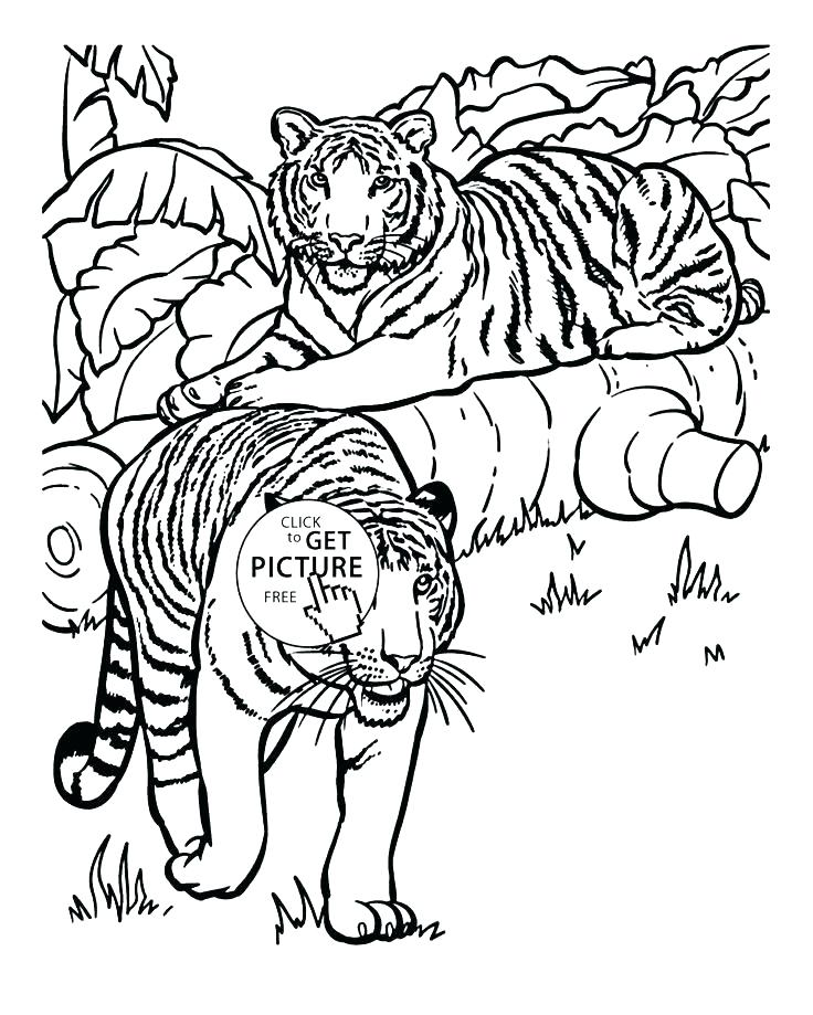 736x919 Cool Realistic Animal Coloring Pages Fee Real Medium Size
