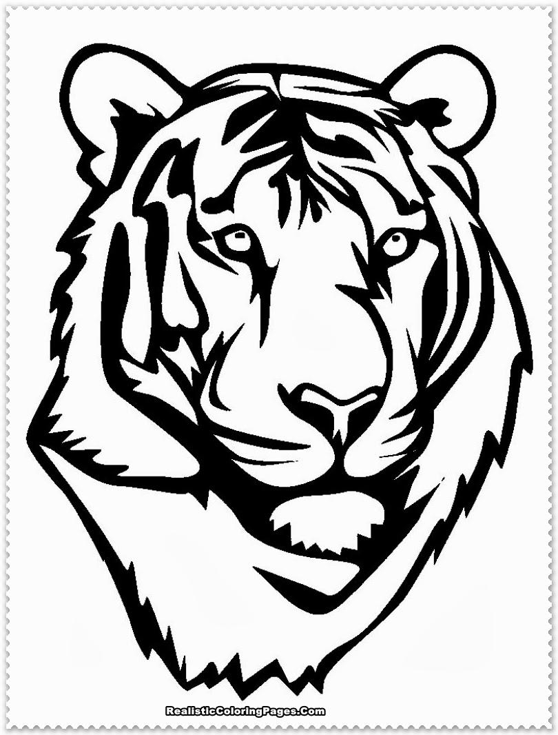 810x1066 Drawn Tiger Malayan Tiger