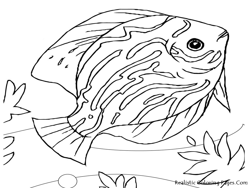 1024x768 Ocean Animals Coloring Pages Sea Life Presented