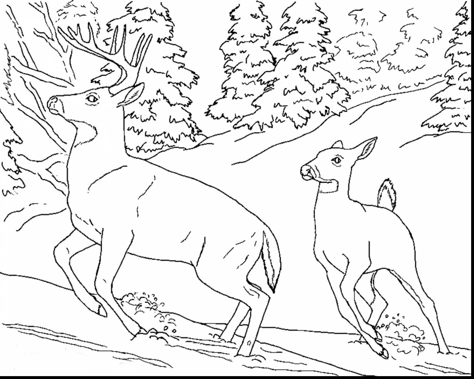1650x1320 Realistic Animal Coloring Pages