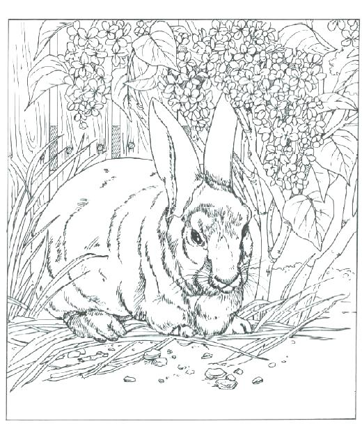 520x614 Realistic Animal Coloring Pages