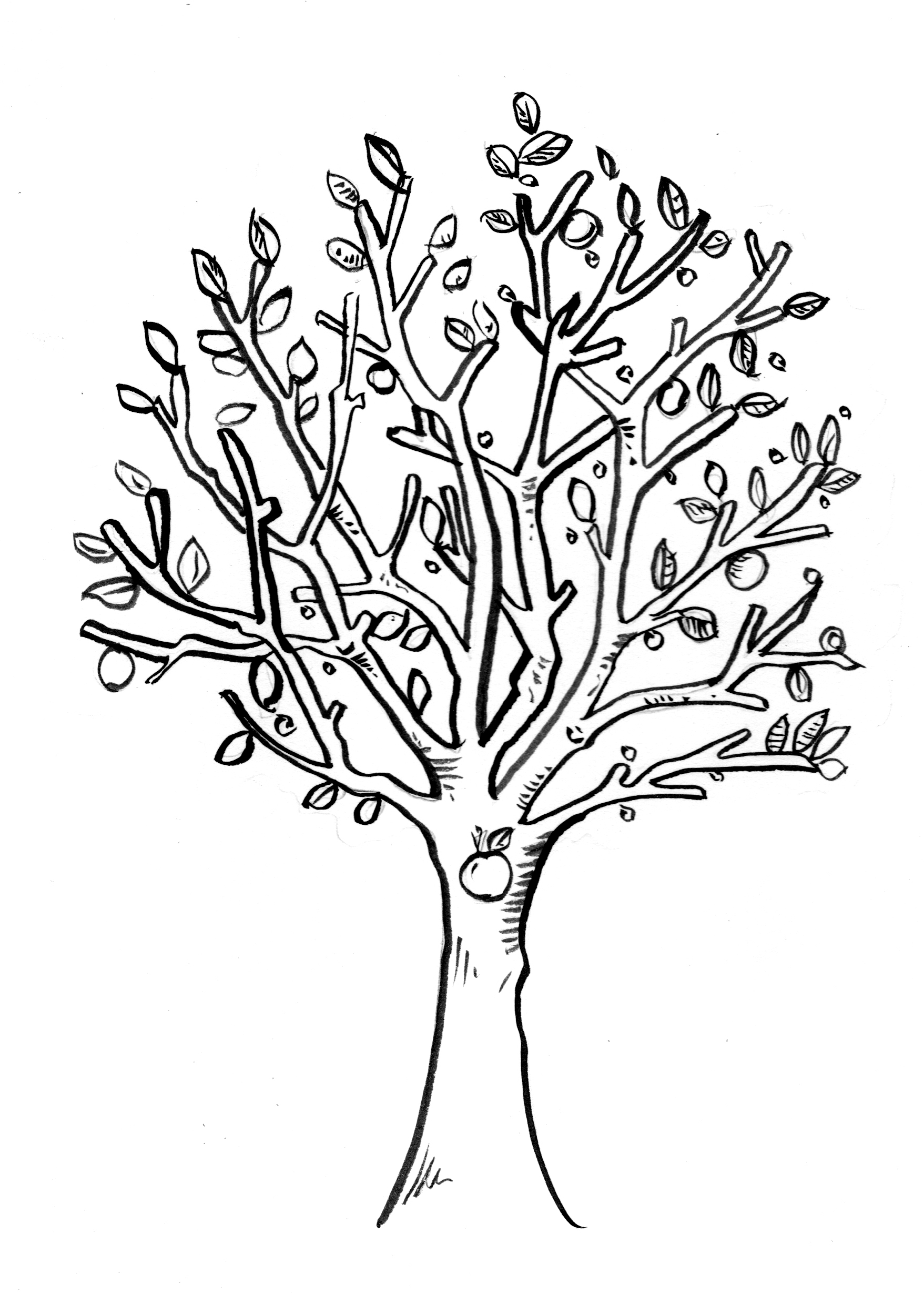 1757x2460 Drawing Of Apple Tree Realistic Apple Tree Drawing Clipart Panda