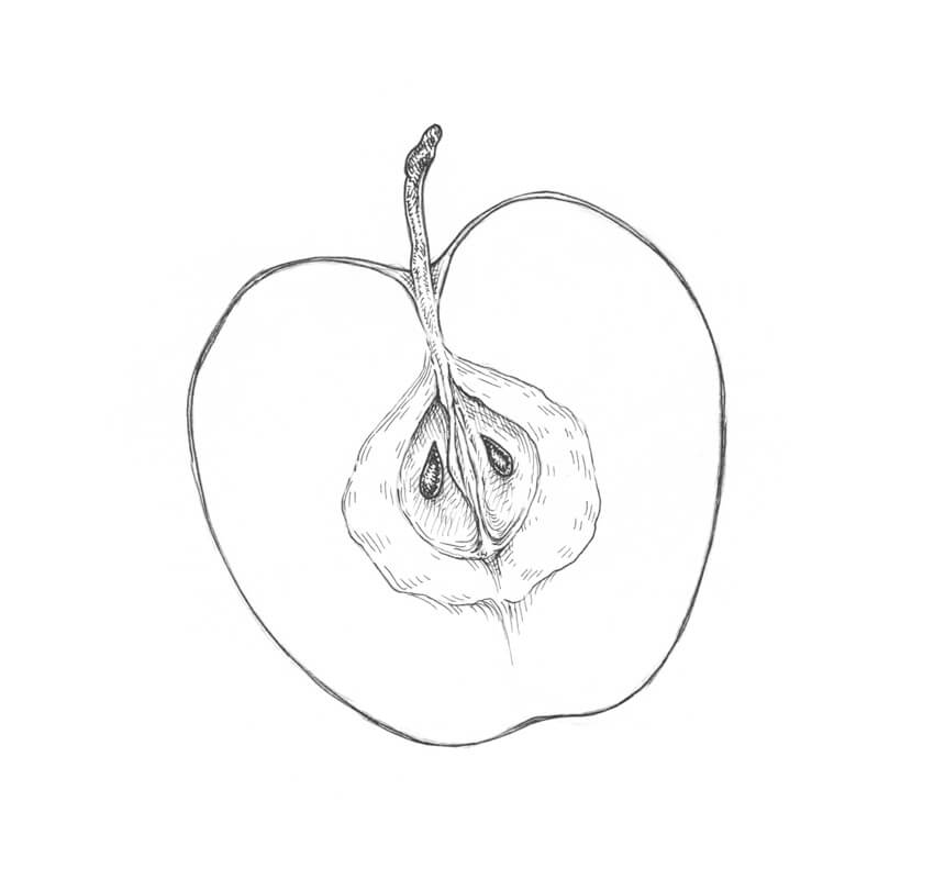 850x800 How To Draw An Apple