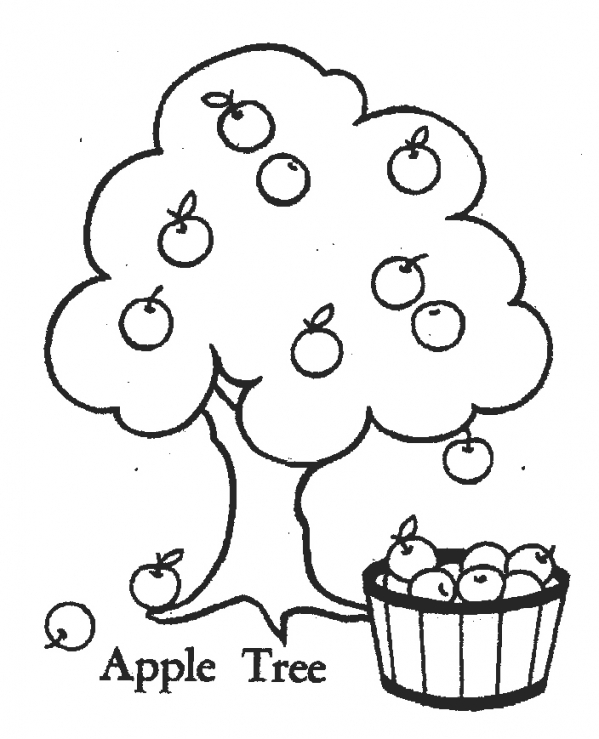 599x739 Realistic Apple Tree Coloring Page, Fruit Apple Tree Coloring Page