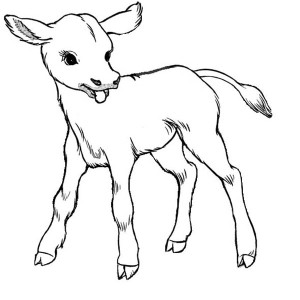 300x300 Cow, Just Born Baby Cow Coloring Page Just Born Baby Cow Coloring