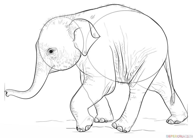 802x575 How To Draw A Baby Elephant Step By Step Drawing Tutorials