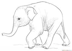 236x169 How To Draw A Baby Elephant Step By Step. Drawing Tutorials
