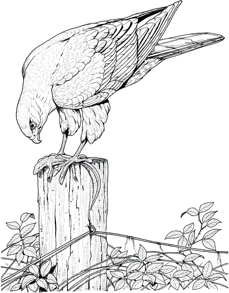 736x944 Realistic Animal Coloring Pages Realistic Printable Drawing Pages