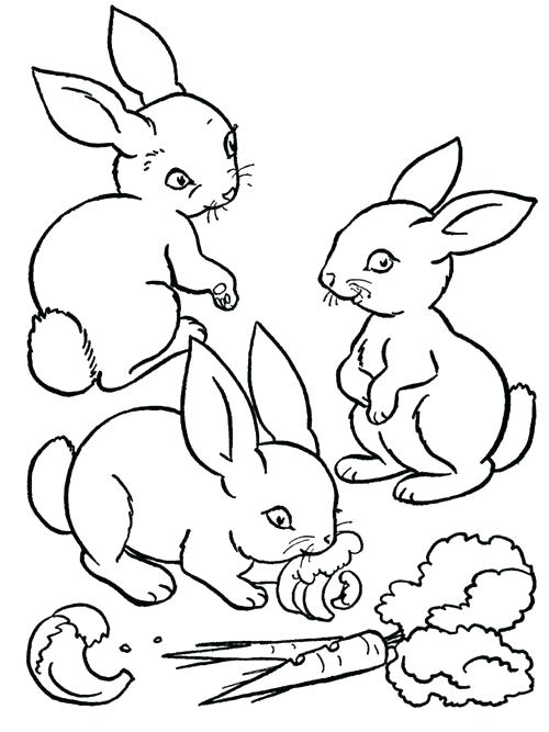500x667 Color Book Pages And Baby Farm Animals Coloring Pages Baby Farm