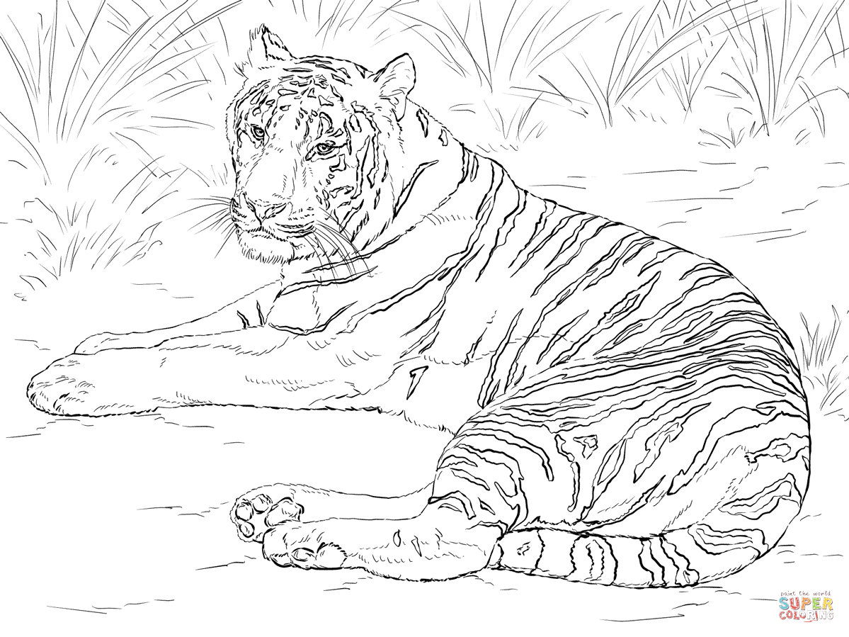 1199x899 Coloring Pages Tigers Colouring Pages Baby Tiger Coloring Page