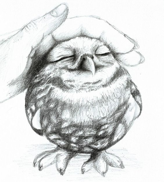 Realistic Barn Owl Drawing