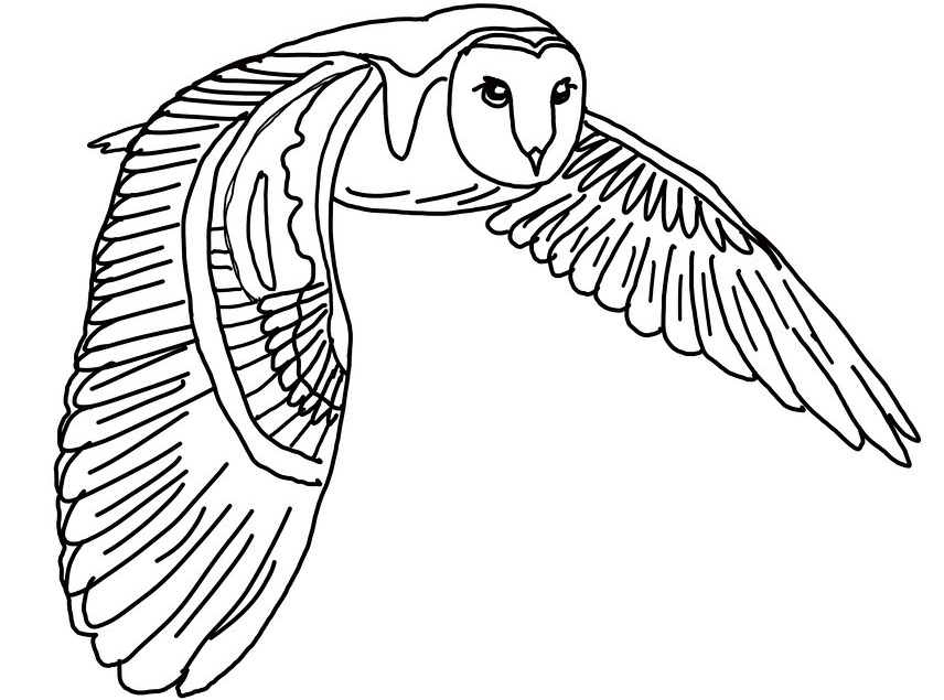 856x635 Flying Owl Coloring Pages Realistic Owl Coloring Pages