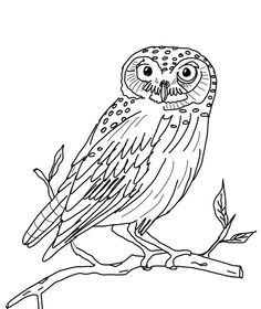236x280 How To Draw A Realistic Owl Step By Step. Drawing Tutorials