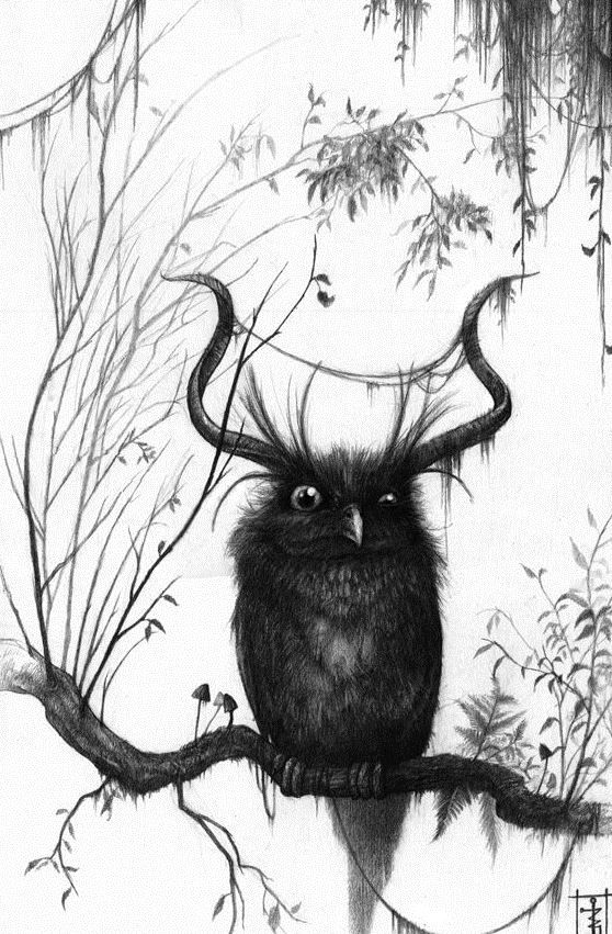 558x851 137 Best Owl Art Images On Owls, Barn Owls