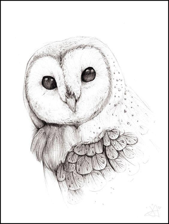 564x747 Original Barn Owl Charcoal Drawing