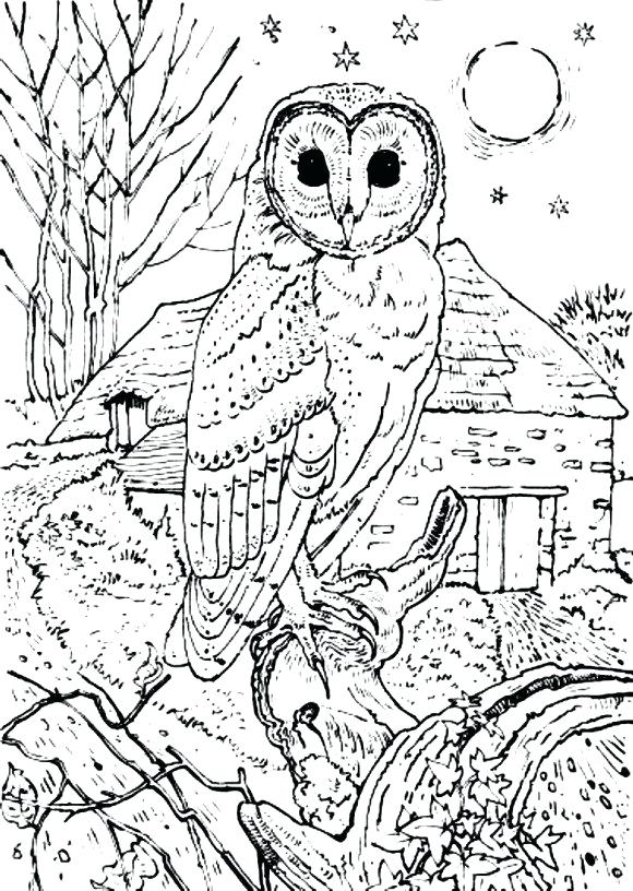 580x816 Owl Coloring Barn Owl Coloring Pages Print Media