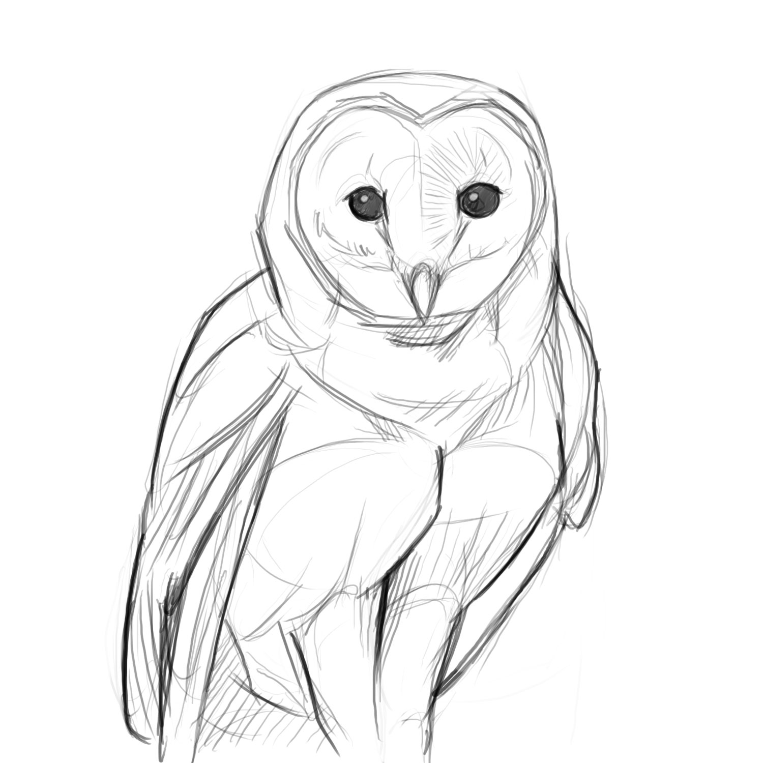1500x1500 Quick Sketch Of Barn Owl Owl Sketches Owl Sketch