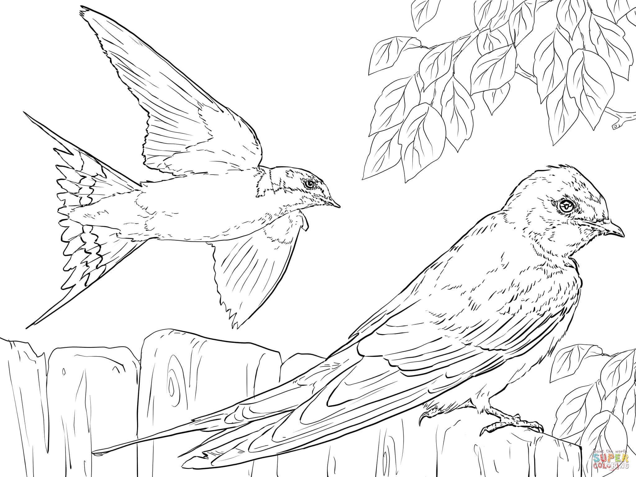 2048x1536 Realistic Barn Swallows Coloring Page Free Printable Pages