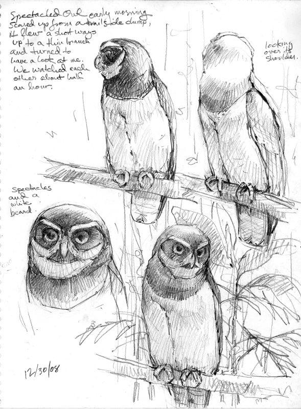 589x800 305 Best Paint Birds Images On Beautiful Birds