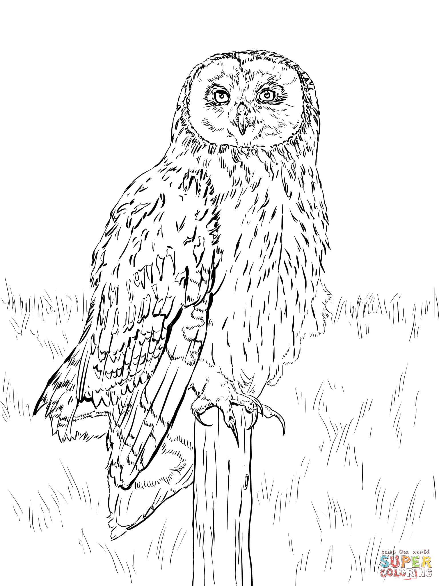 1536x2048 Short Eared Owl Coloring Page Free Printable Coloring Pages