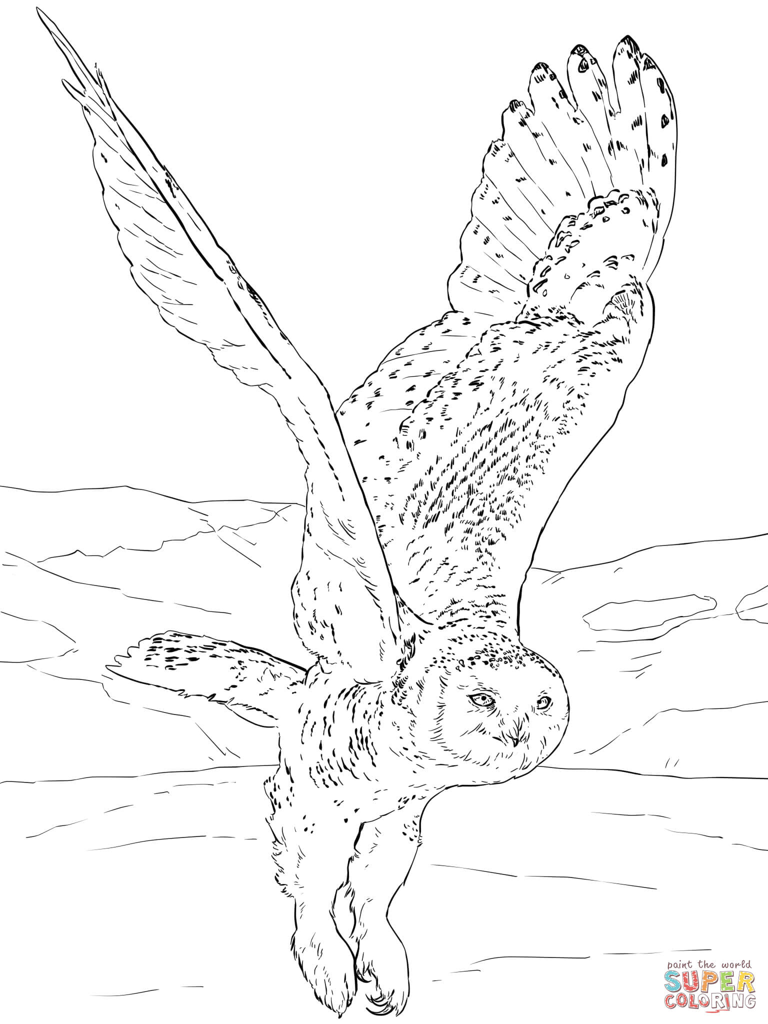 1536x2048 Snowy Owl Coloring Page Free Printable Coloring Pages