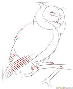 236x286 How To Draw A Barn Owl Step 3 How To Draw Barn