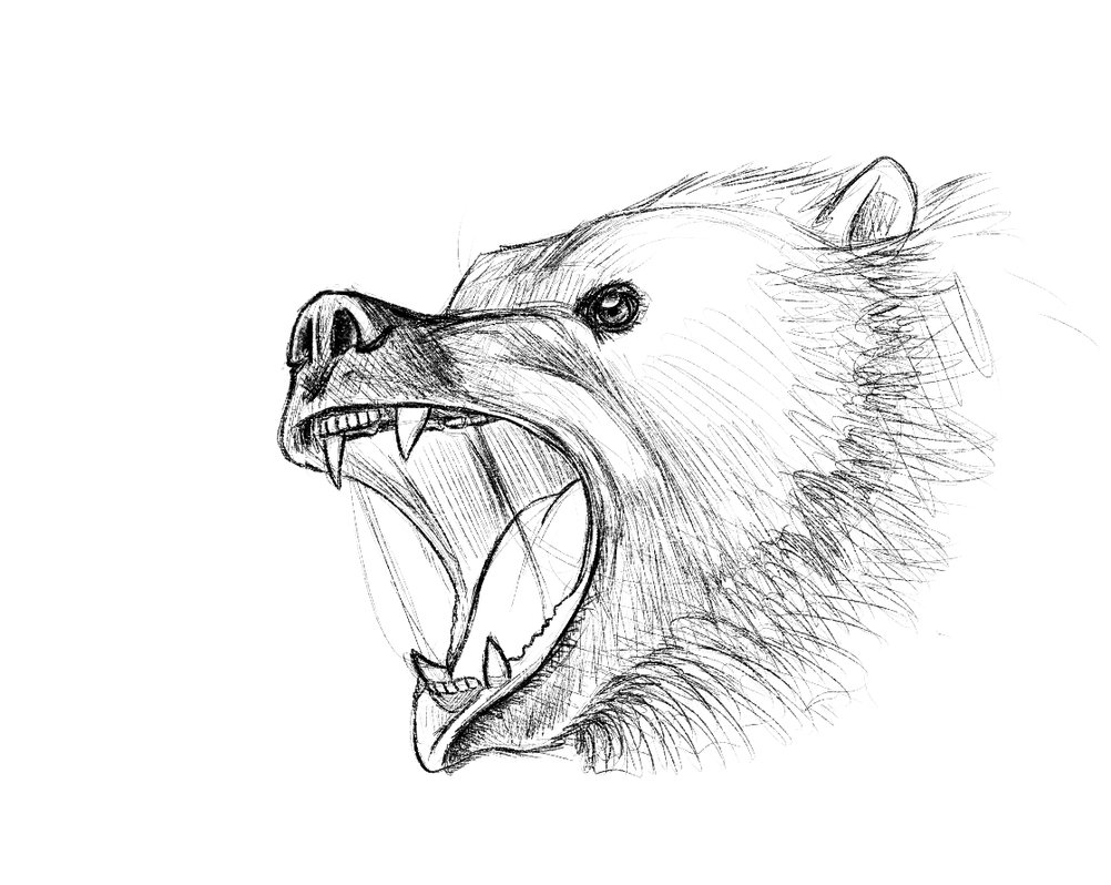 1002x798 Drawn Grizzly Bear Angry Bear