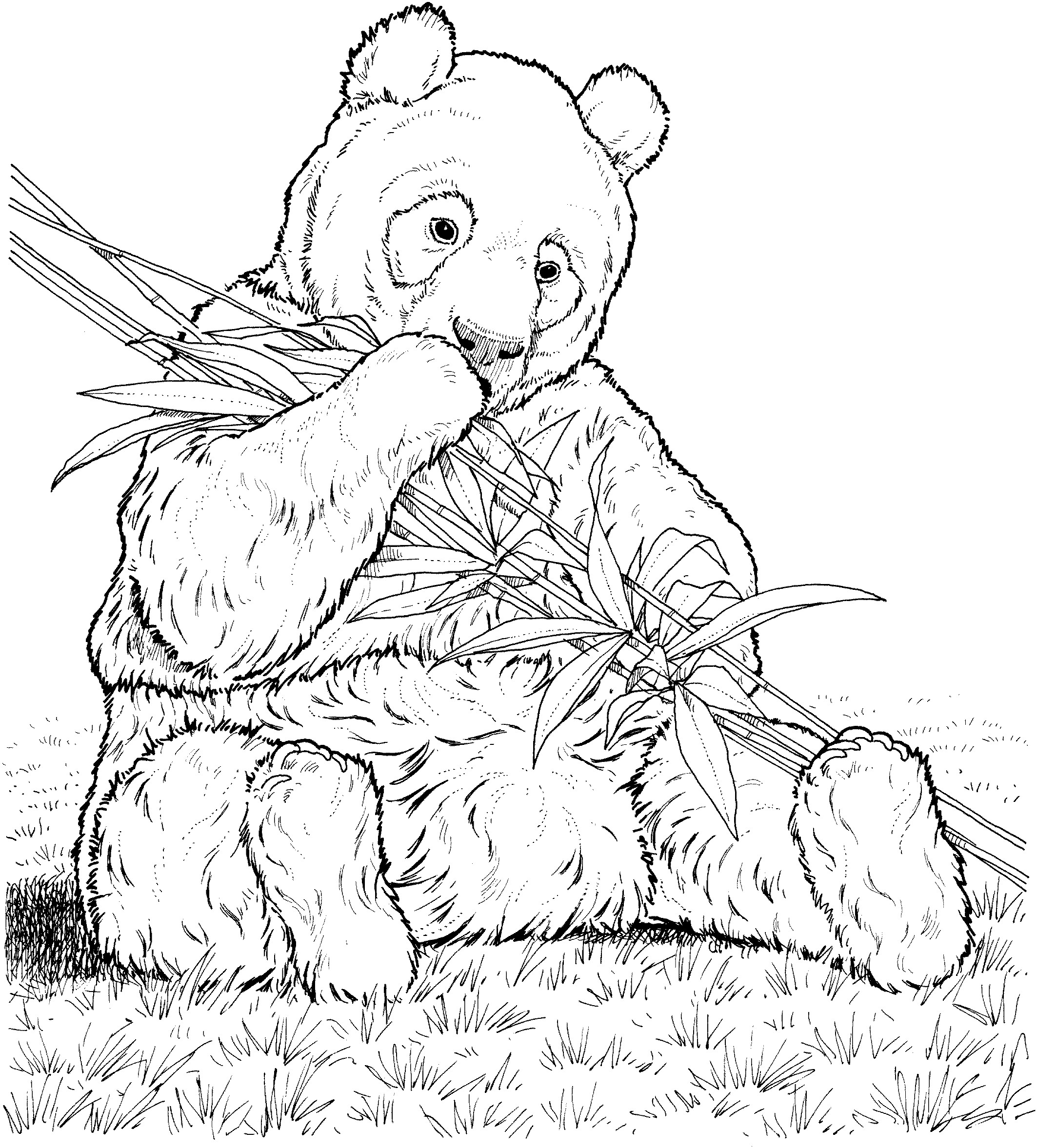 Realistic Bear Drawing at GetDrawings.com | Free for personal use ...