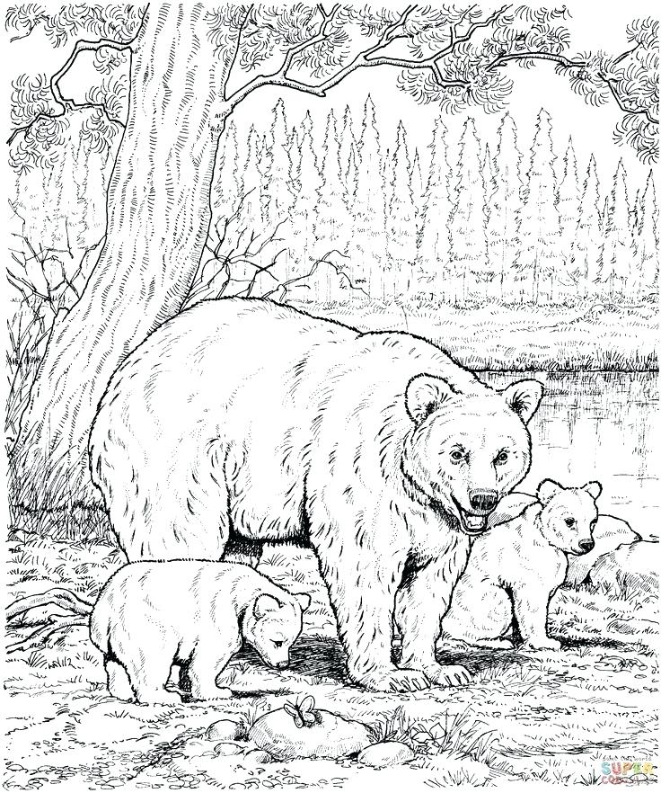 736x882 Grizzly Bear Coloring Pages Bears Coloring Pagesre Great