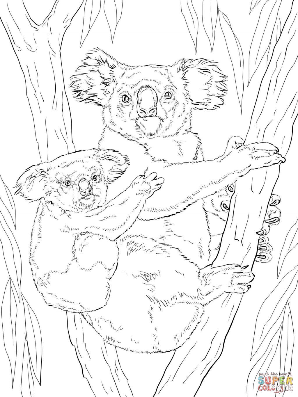 1024x1365 Adult ~ Koala Coloring Pages Cool Koala Image Bear Page Koala Bear
