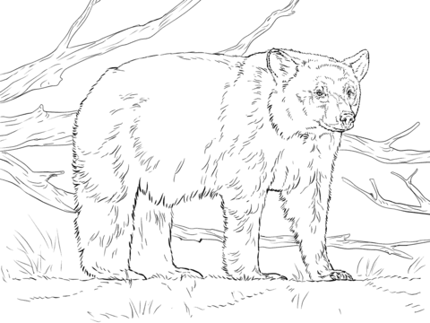 480x360 Realistic American Black Bear Coloring Page Animal Coloring