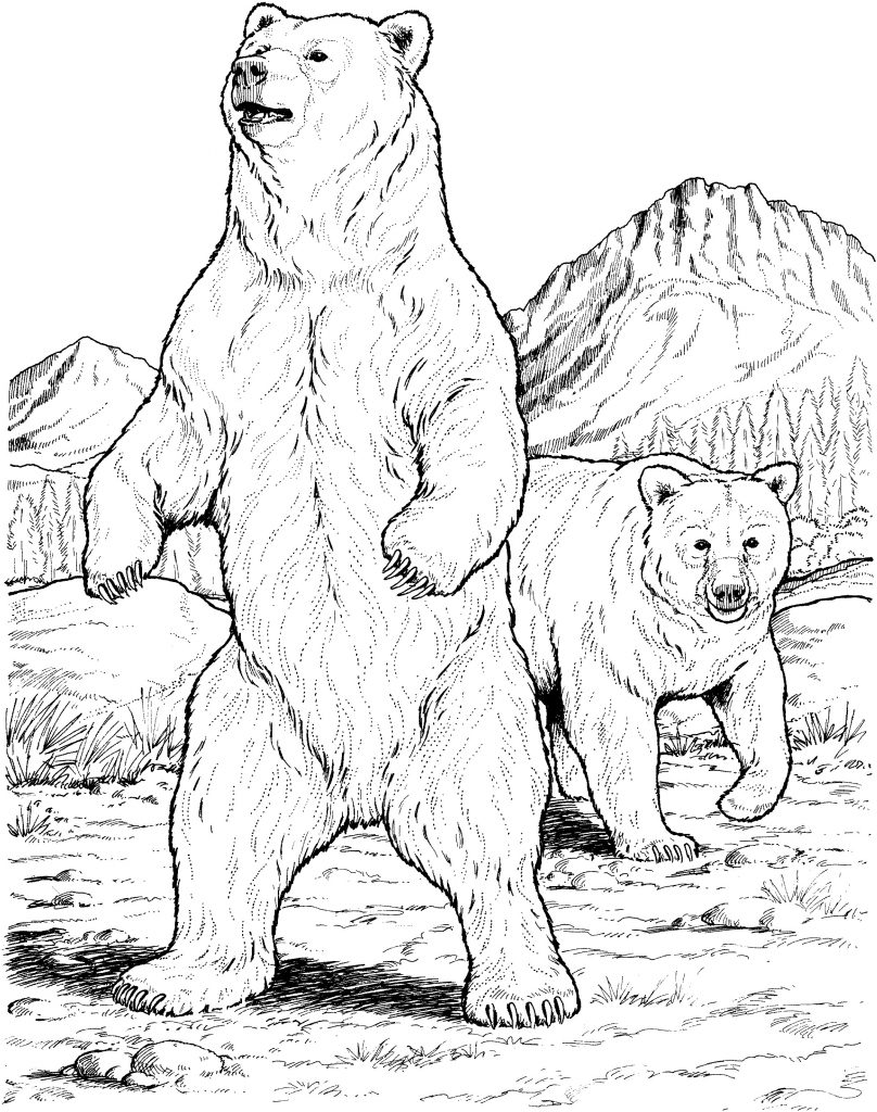 808x1024 Realistic Bear Coloring Pages New Russian Bear Coloring Page Kids