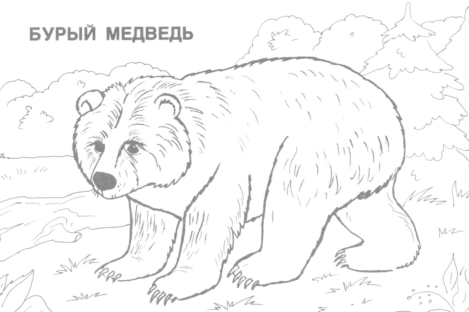 1599x1065 Realistic Wild Animal Coloring Pages U2013 Color Bros