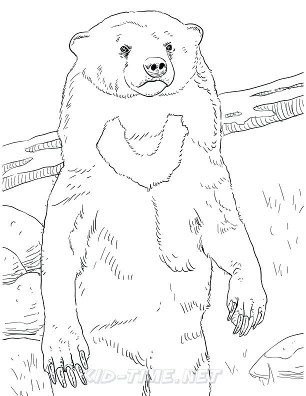 612x792 Grizzly Bear Coloring Pages Synthesis.site
