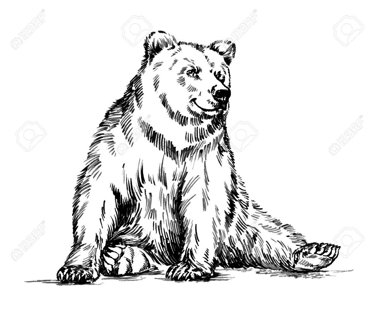 1300x1083 Black And White Engrave Ink Draw Isolated Vector Grizzly Bear