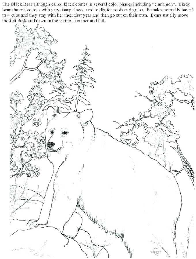 coloring-pictures-of-black-bears-tammy